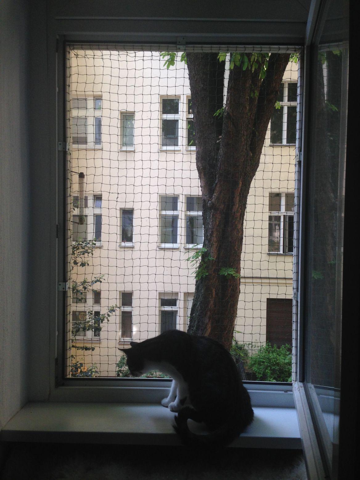 DIY Fenstersicherung für Katzen ohne bohren | Fenstersicherung ...