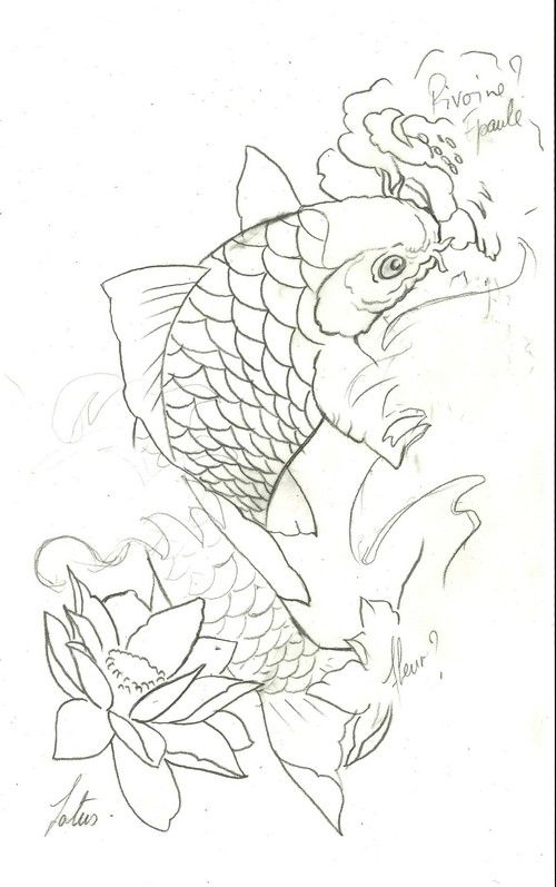 Esquisse de carpe ko pour le tatouage d 39 idris dessin r alis par sylvaine du studio syltattoo - Dessin carpe koi ...