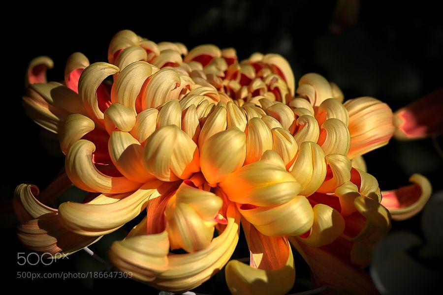 Flower by Akiatoshiaki. @go4fotos