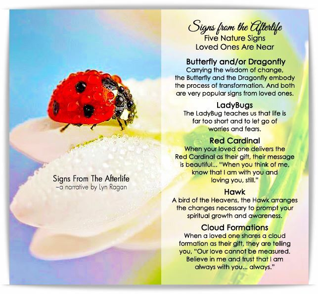 Five Nature Signs Loved Ones Are Near - Butterfly, Ladybug, Cardinal