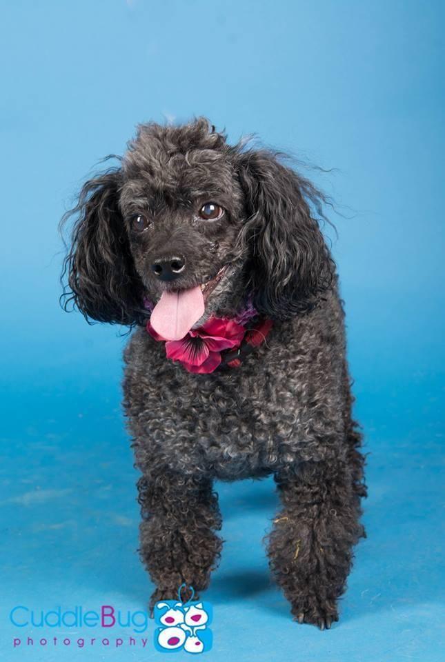Adopt Angel On Pets Adoption Animal Rescue
