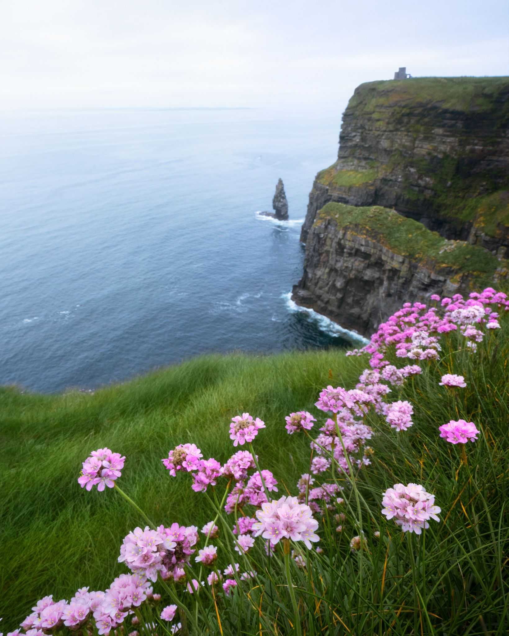 Flowers Blooming All Over The Cliffs Of Moher Ireland 1639x2048 Oc Cliffs Of Moher Scenic Landscape Beautiful Landscapes