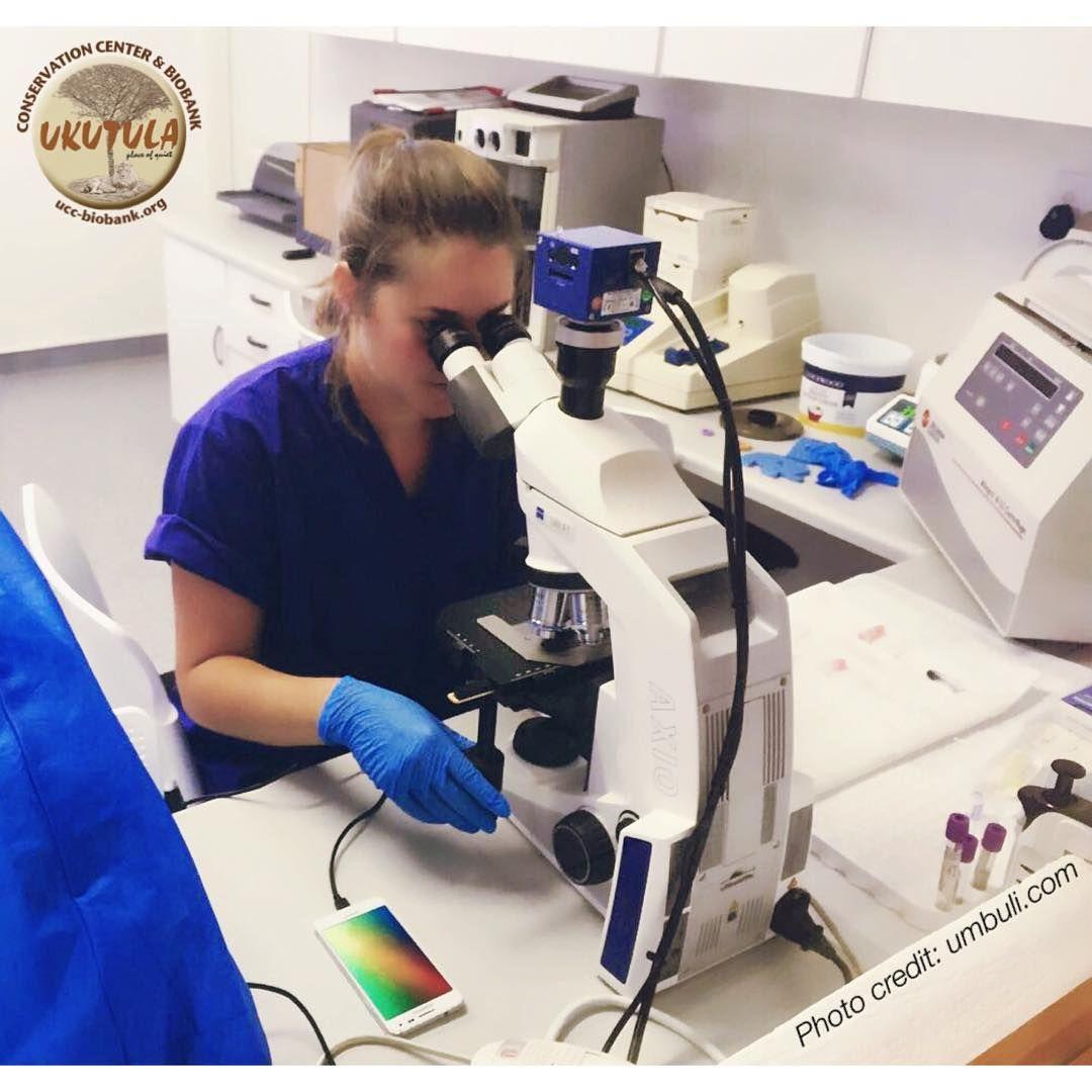 research veterinarians