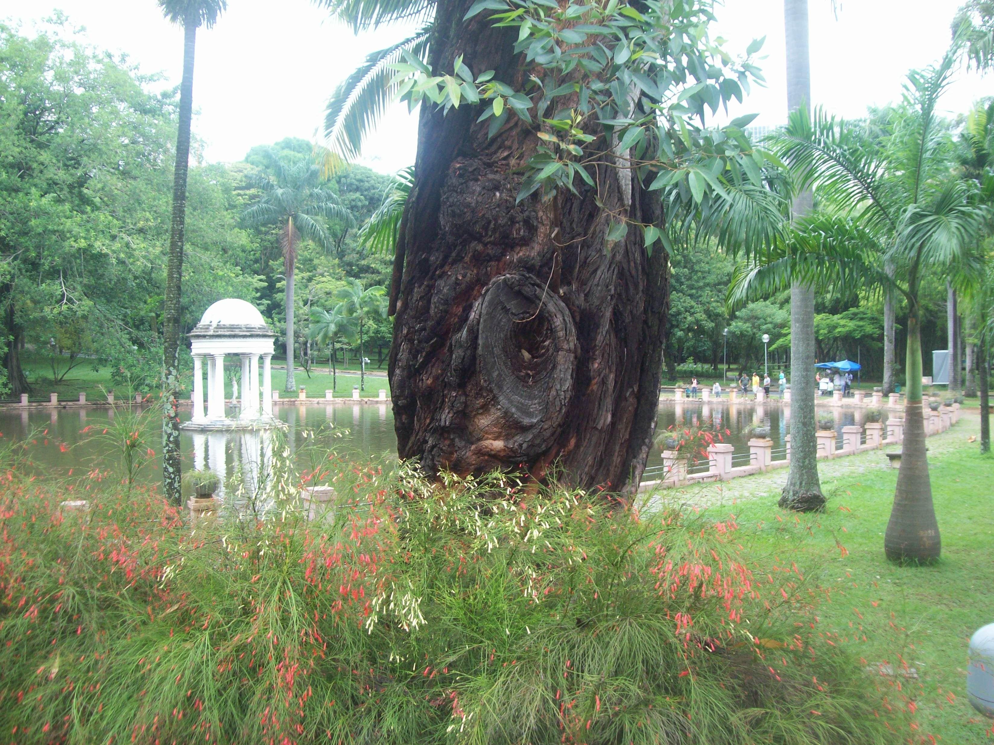 Parque Municipal - BH - Minas Gerais - Brasil