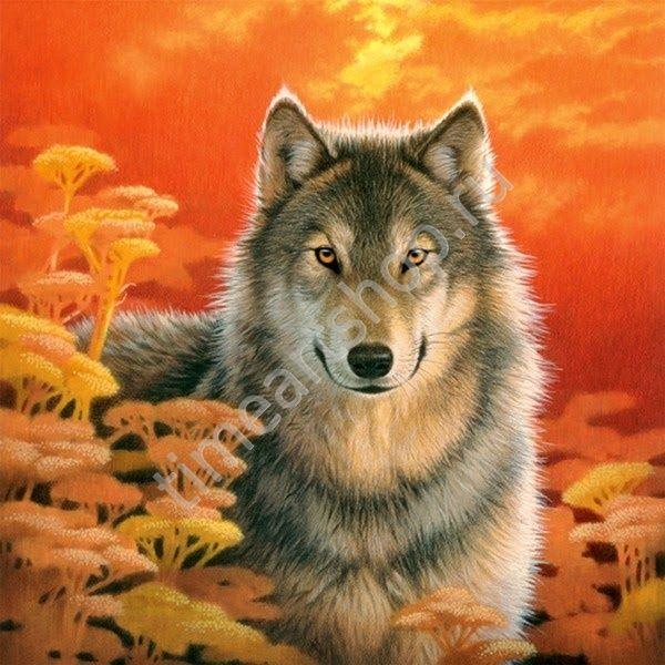"""Марго Wilhelm """"Волк на закате"""", картина раскраска по ..."""