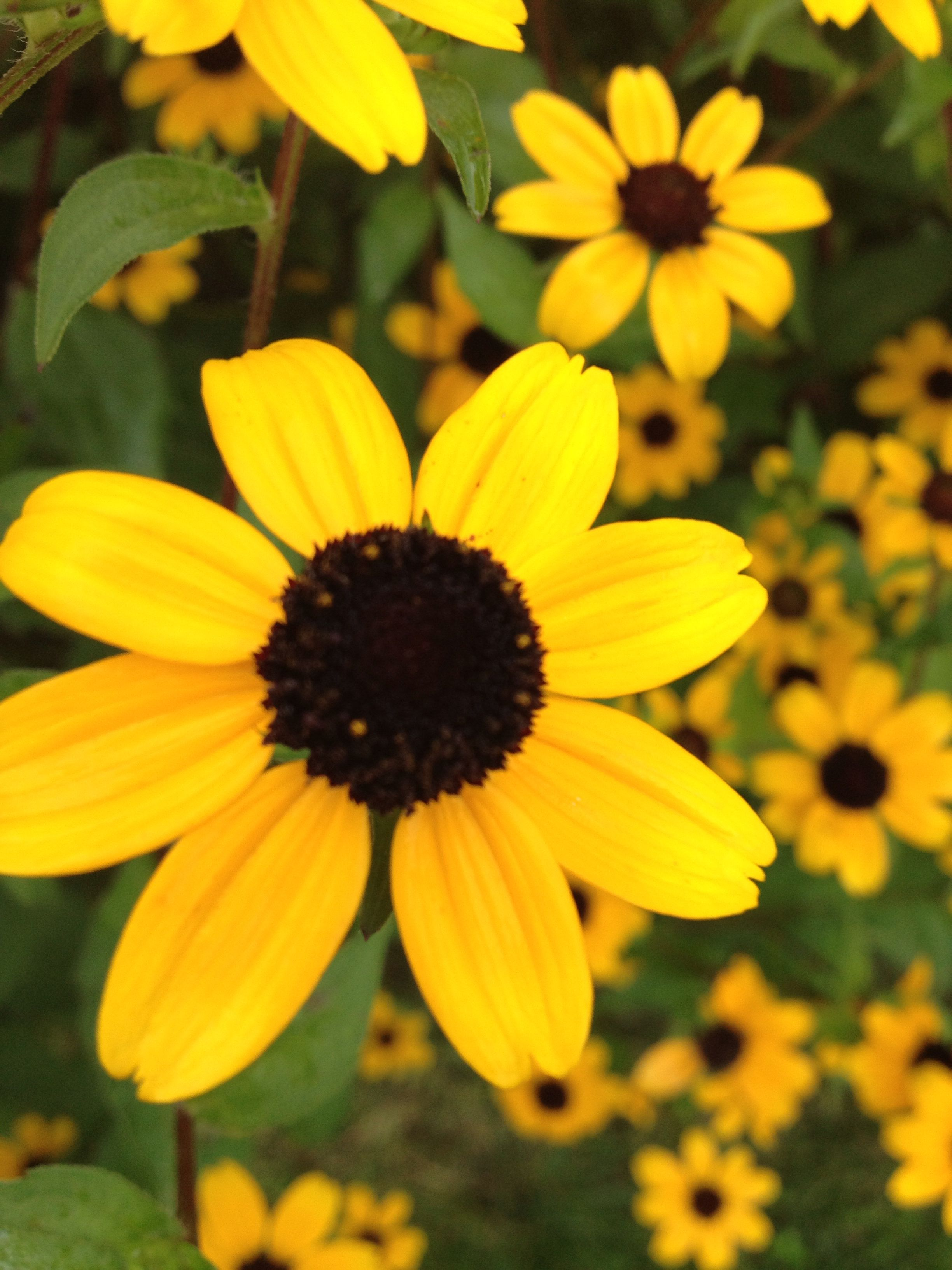 Pretty Yellow Flowers Flowers Pinterest Yellow Flowers And Flowers