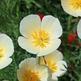 Flower seeds online bulk packets for sale non gmo flower seeds online bulk packets for sale non gmo edenbrothers mightylinksfo