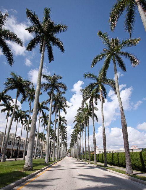 Freeways, Street hierarchy, Palm trees line - Palm Beach, Florida, United  States