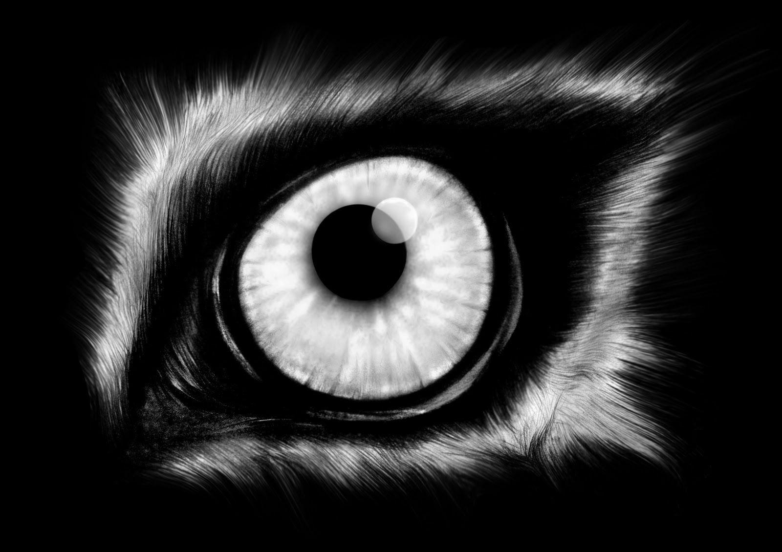 wolf head illustration - Google Search