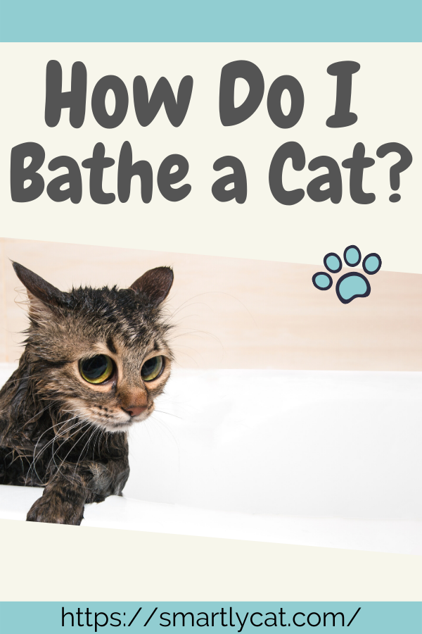 Bathing A Cat Might Just Be One Of The Hardest Things You Will Ever Have To Do As A Cat Owner Get Helpful Tips On Giving Your Cat A Bath