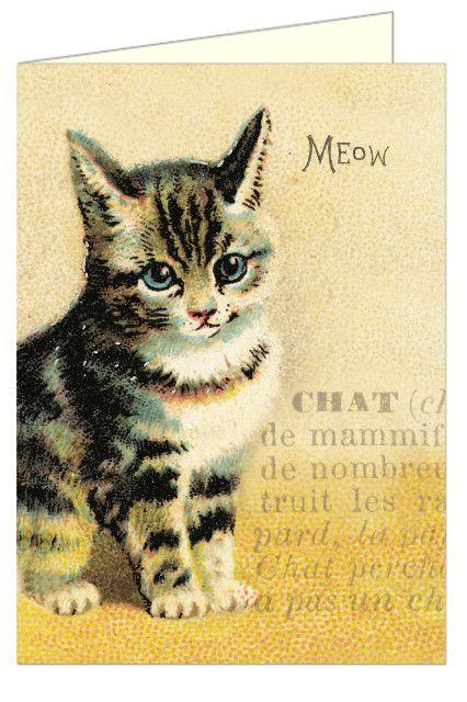 .יולטה - מוצרי נייר איכותיים ויחודיים | סט 10 כרטיסי ברכה ומעטפות : Vintage Cat