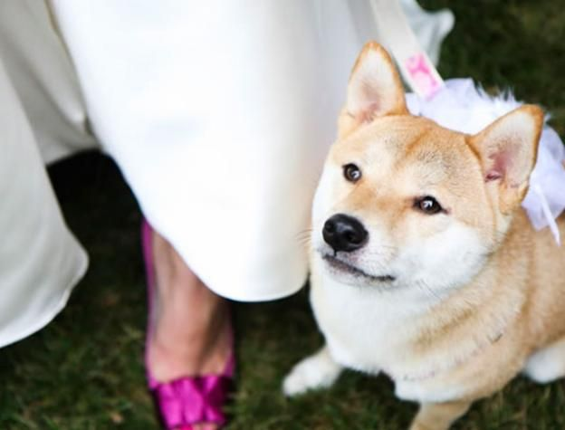 Ring Bearer Wedding Pets Hilton Head Island Wedding Pets