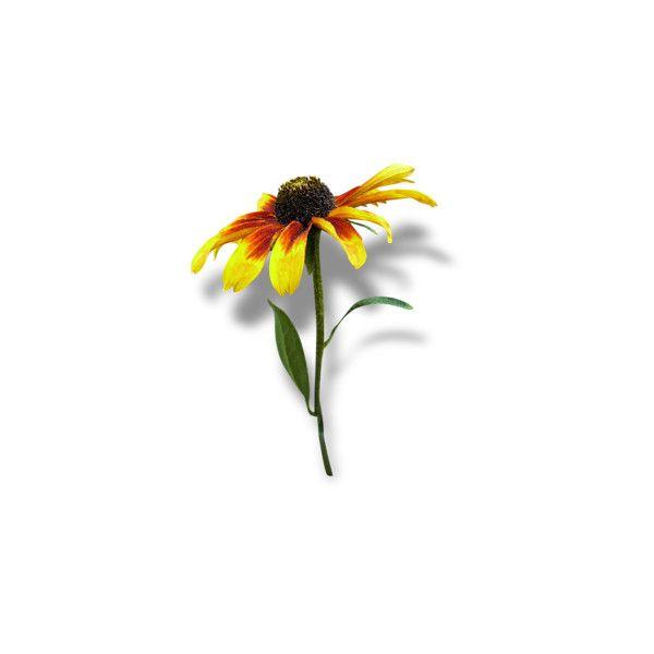 Arana Flipkens — альбом «SCRAP KITS / SCRAP KIT 11 / SK Autumn... ❤ liked on Polyvore featuring flowers and yellow