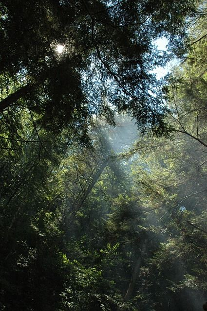19+ Wild woodstock forest sanctuary trends