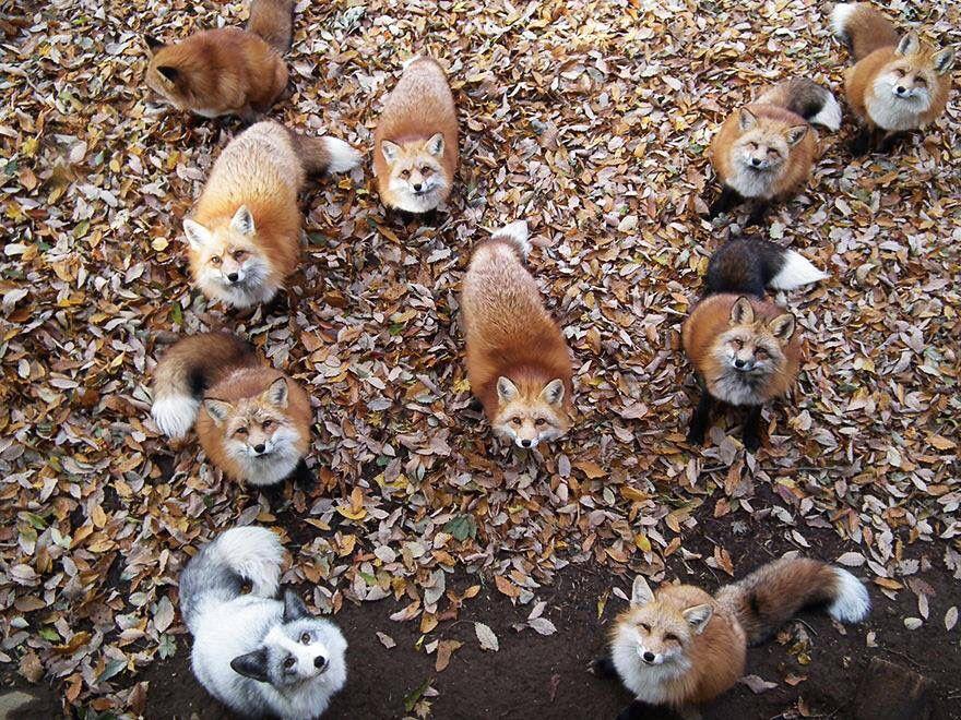 Zao Kitsune Mura - Japon - le village des renards.