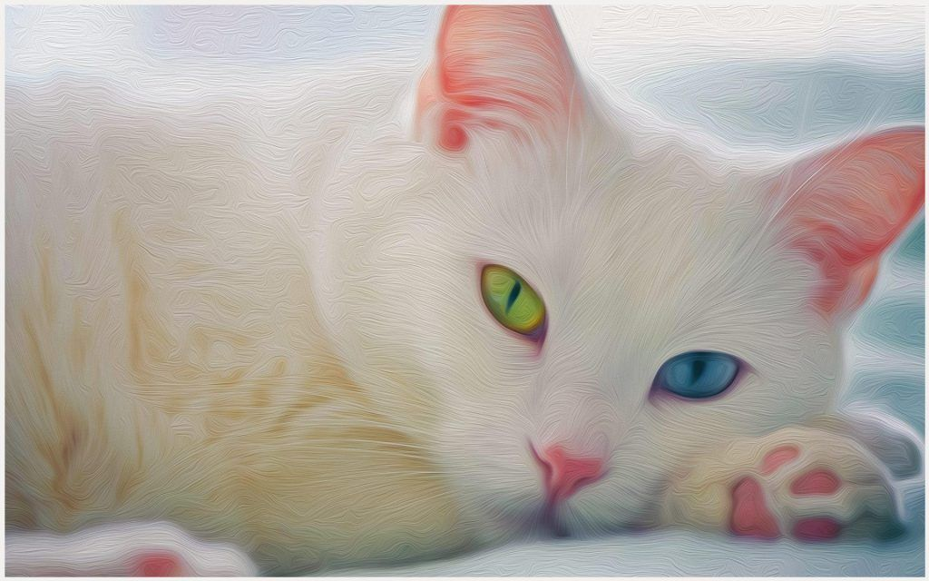 White Cat Wallpaper Beautiful White Cat Wallpaper Black White