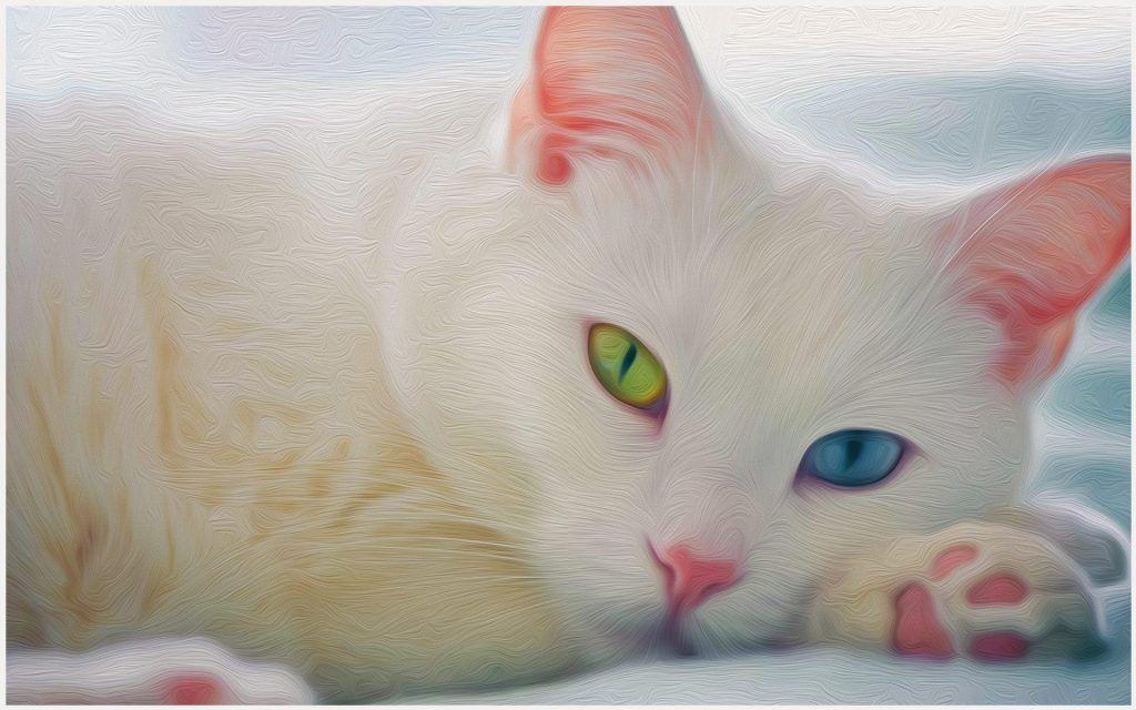 White Cat Wallpaper Beautiful White Cat Wallpaper Black White Cat Wallpaper Cute White Cat Wallpaper Cute White White Cats Pretty Cats Cat With Blue Eyes
