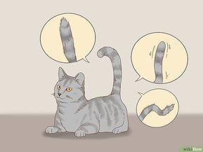 Katzensprache lernen