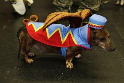 Chicago Halloweenie Dachshund Dog Flying Monkey