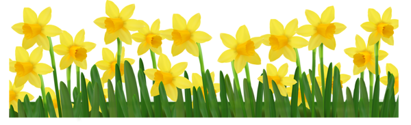 Grass With Daffodils Png Clipart Picture Clip Art Daffodils Free Clip Art