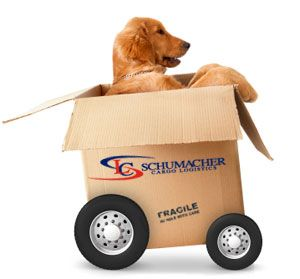 Tips For Moving With Pets Cross Country