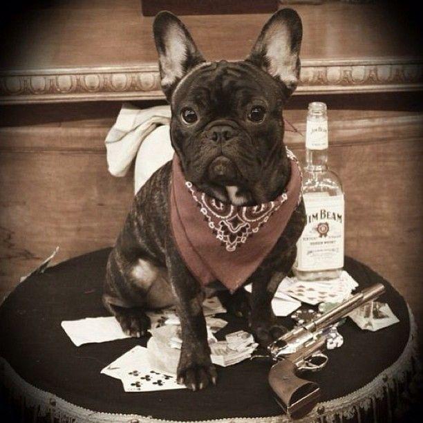 Cowboy Brindle French Bulldog Bulldog French Bulldog