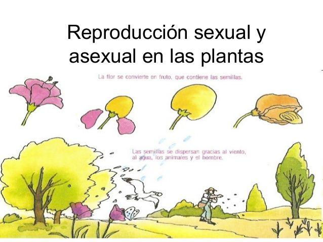 Plantas asexual y sexsual