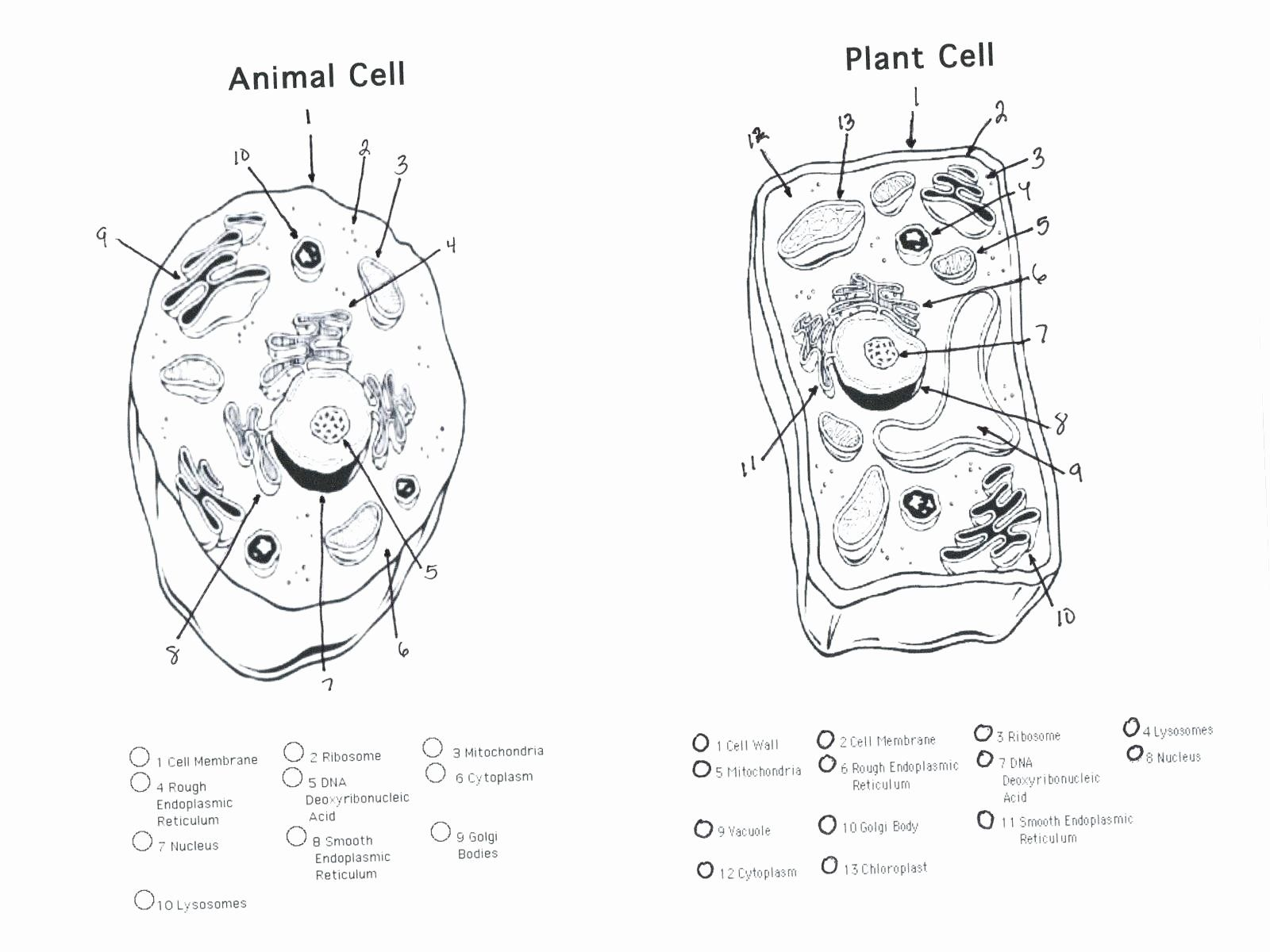 Cell Phone Coloring Sheet Best Of Cell Coloring Hitcolor