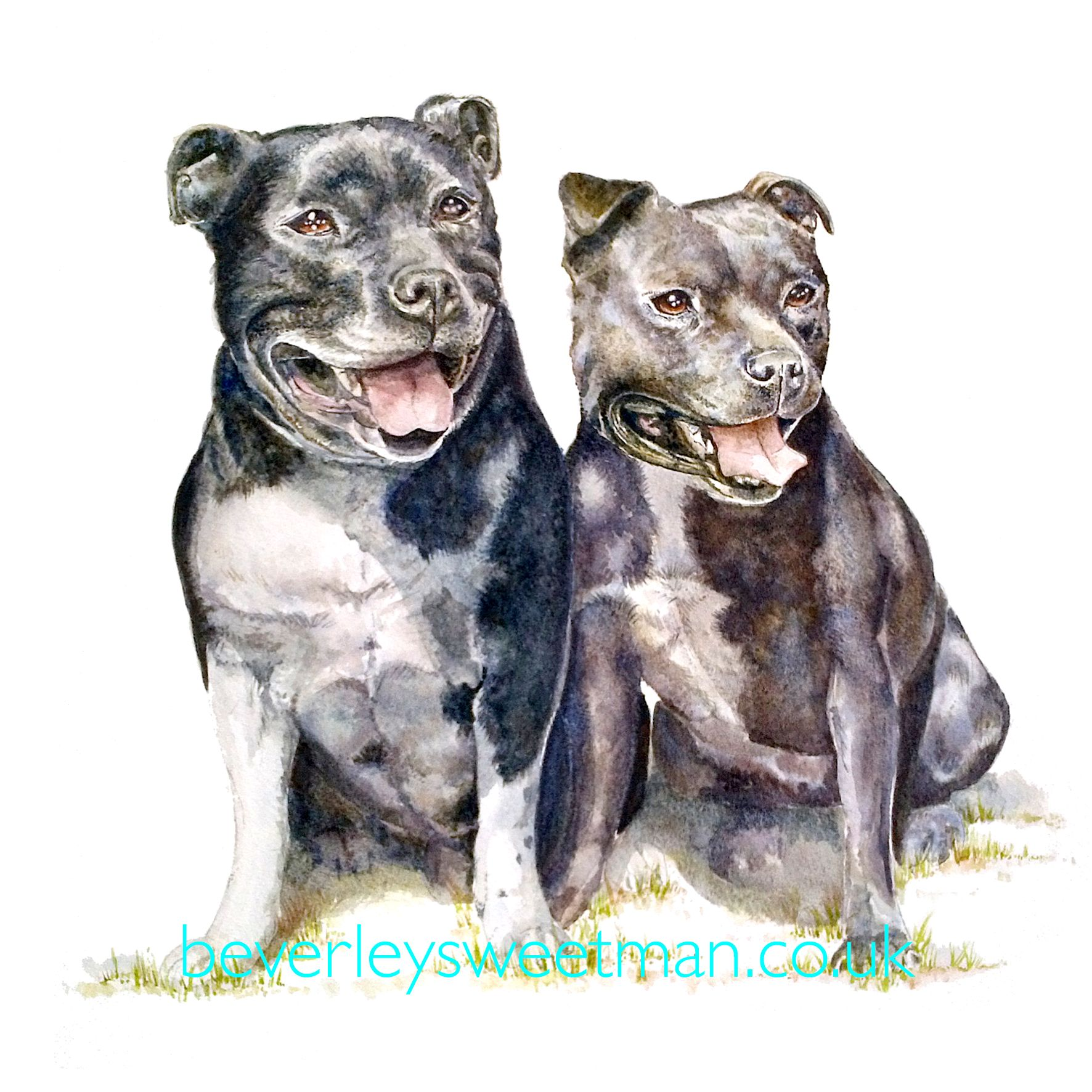 Staffordshire Bull Terrier Staffies Portrait Watercolour Painting Dog Drawing Watercolor Dog Stafford Dog