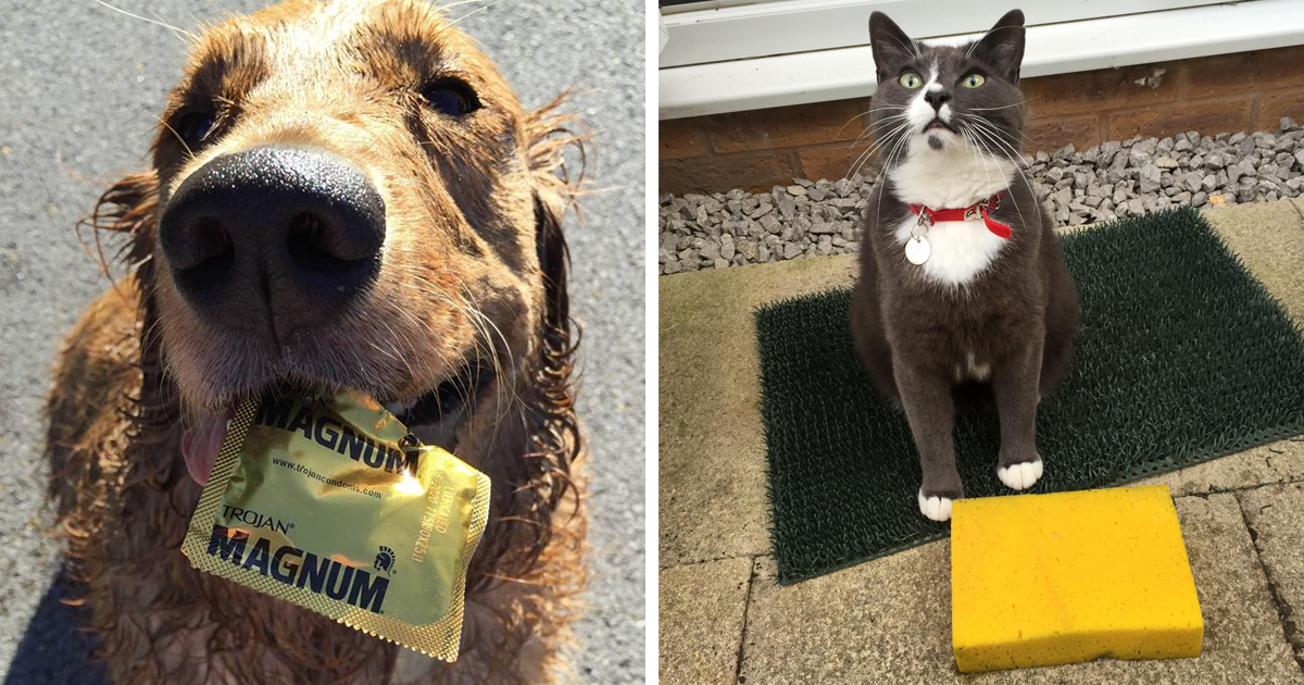 149 Times Pets Brought Their Owners The Most Unexpected Gifts Pets Cute Baby Animals Animals