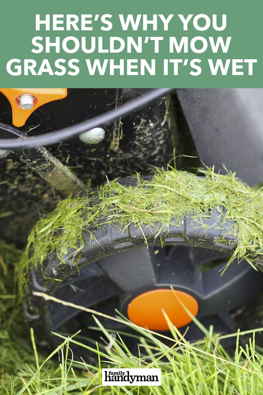 Can You Cut Wet Grass