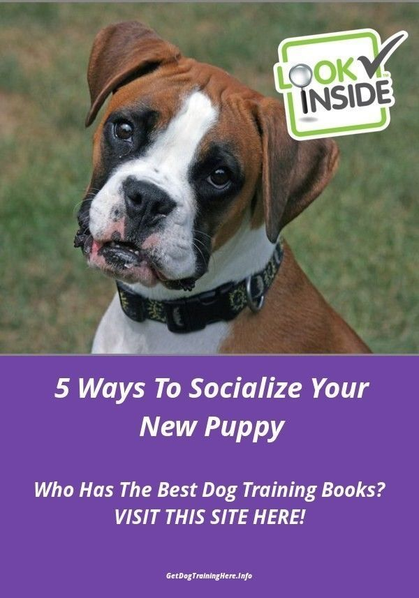 10 Pro Tips For Dog Training By Experts Aggressive Dog Best Dog