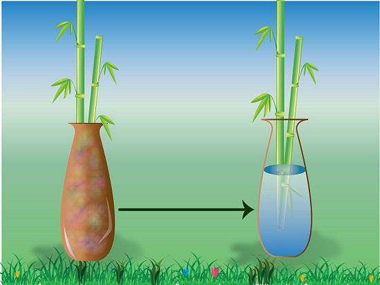 How to take care of bamboo plants in water gardening for Bamboo water garden