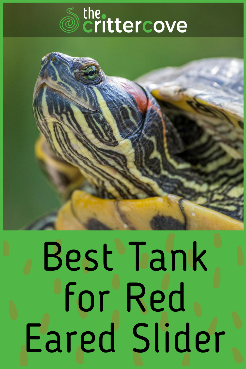 40++ What to feed red eared sliders ideas in 2021