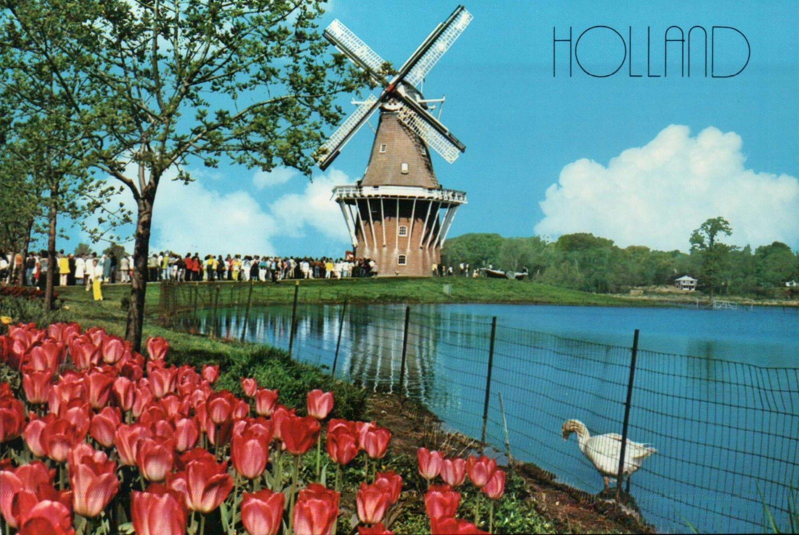 Where to eat and see tulips during the Tulip Time Festival in Holland,  Michigan |