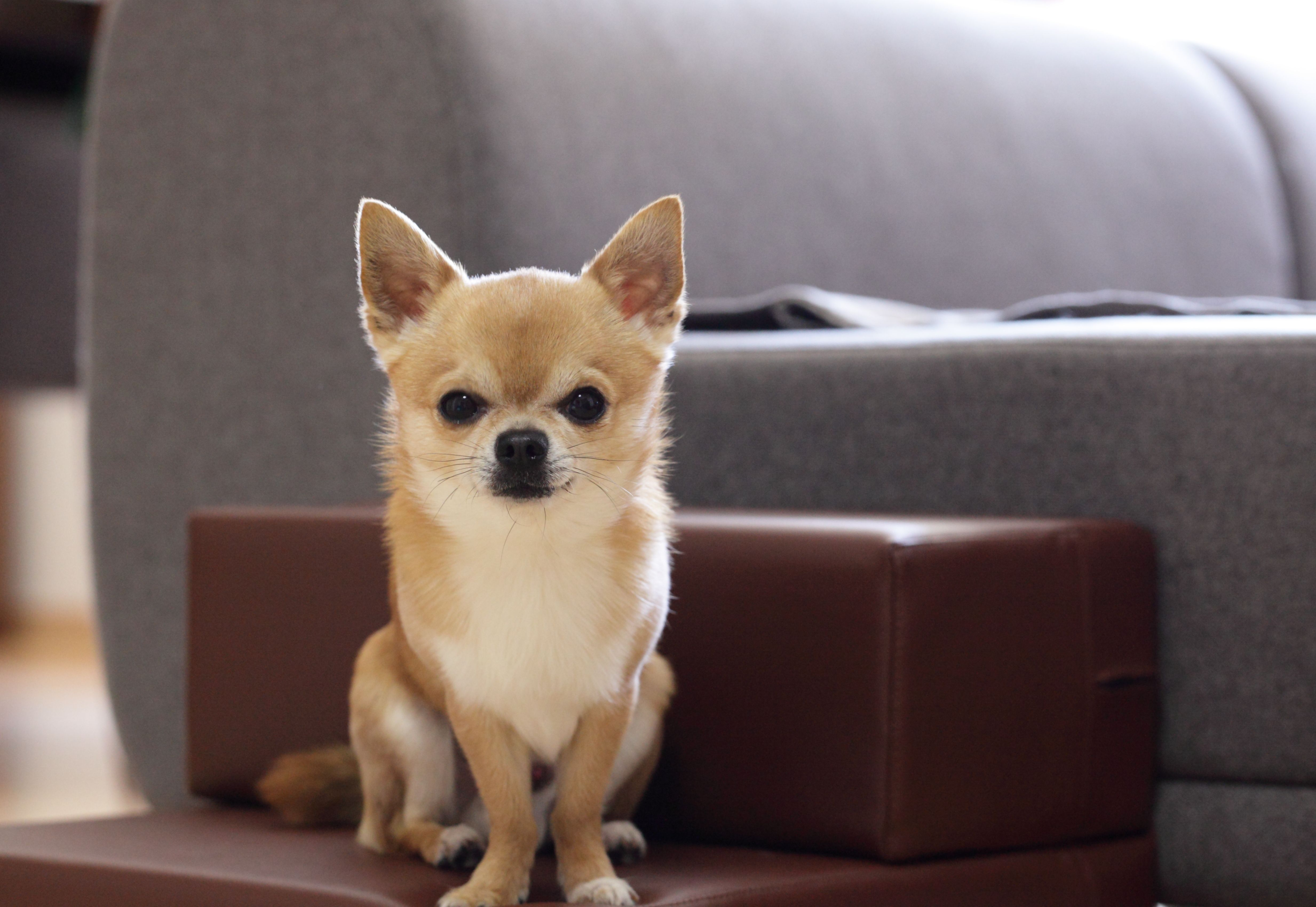 11 Of The Best Dogs For Apartment Dwellers Miniature dog