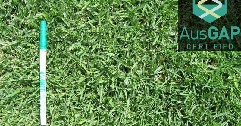 How Much Does Kikuyu Grass Cost In Melbourne Turf Cost Instant