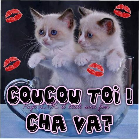 coucou toi cha va coucou chats chatons tasse bol mignons rigolo bisous messages. Black Bedroom Furniture Sets. Home Design Ideas