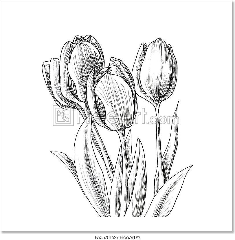 Freeart Fa35701627 Pencil Drawings Of Flowers Flower Drawing Flower Sketch Images