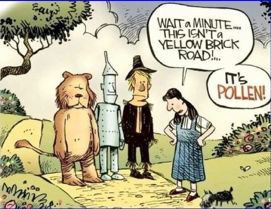 Funny Quotes About Allergies: Wizard Of Oz- Pollen