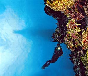 Wall diving, Grand Cayman