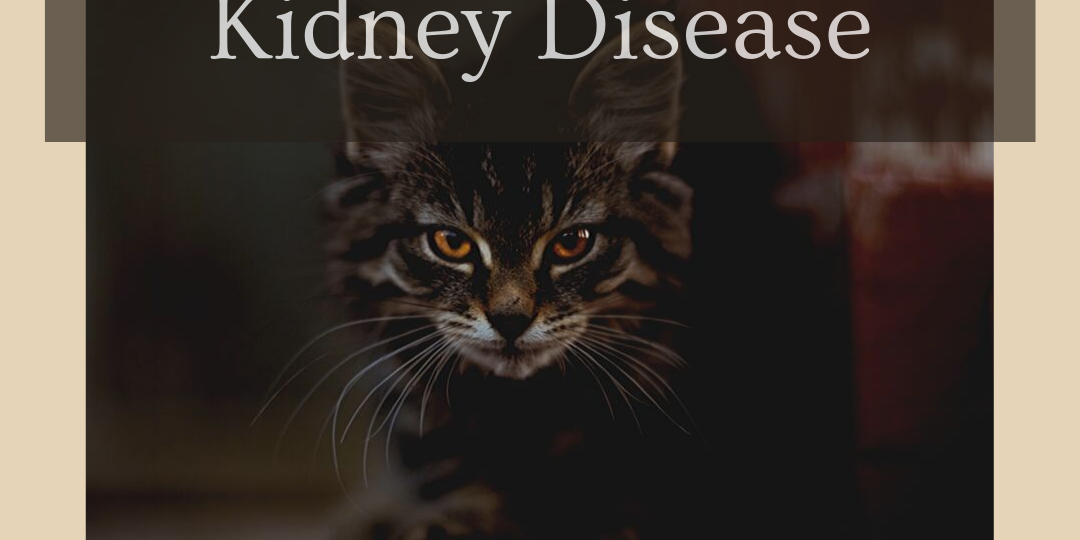 End Stage Feline Kidney Disease How to help the cat