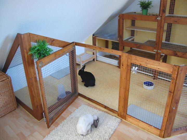 Kaninchenville Kaninchen Kaninchengehege Hauskaninchen