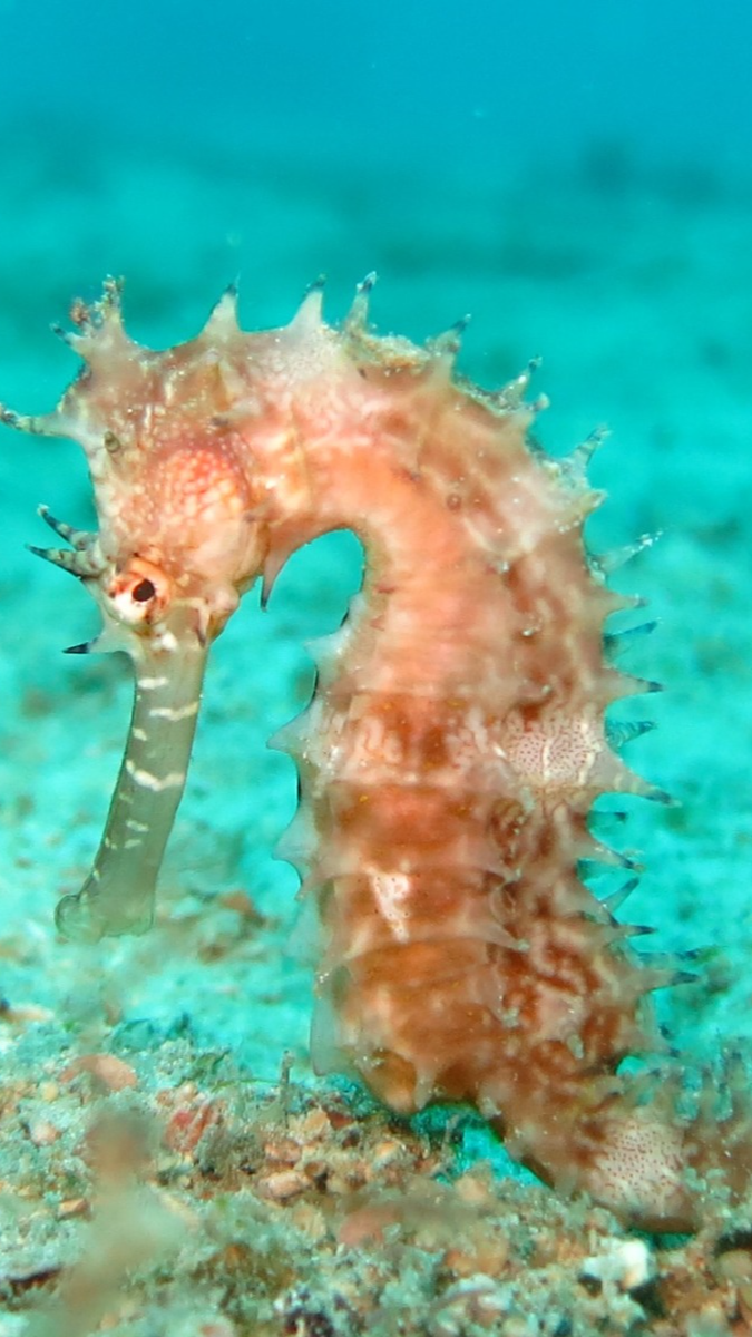 How To Set Up A Seahorse Aquarium An Immersive Guide By The Pet Supply Guy