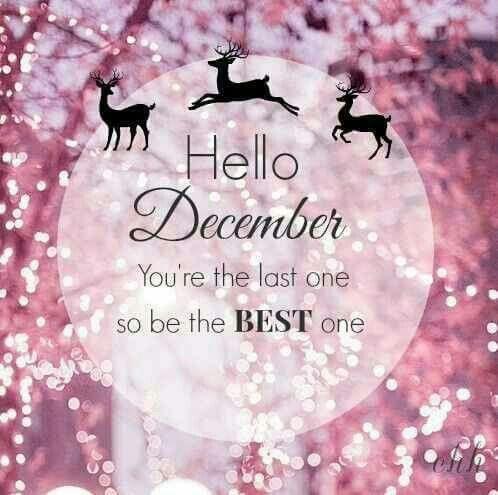 hello hello hello quotes holiday quotes