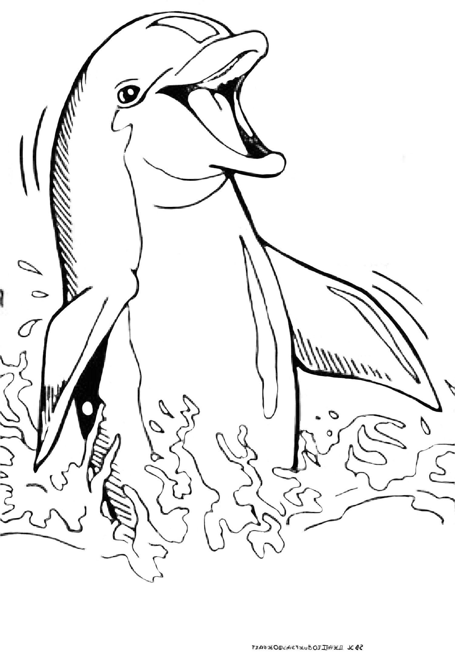 Dessin A Colorier Sirene Et Dauphin Coloriagedauphin Coloriage