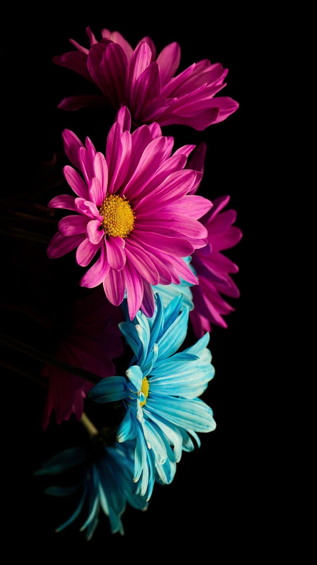 Flowers + fondd'écran hintergrund wallpaper