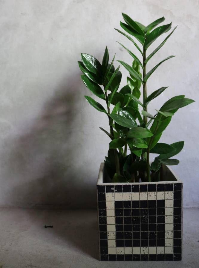 Diez Plantas Bonitas De Interior A Prueba De Asesinos De Plantas - Plantas-bonitas-de-interior