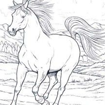 Wild Horse In Running In Horses Coloring Page Horse Coloring Horse Coloring Pages Baby Horses