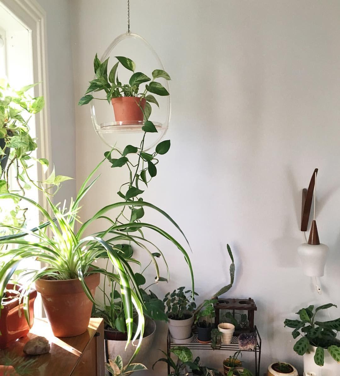 A L I C E M C R A E Plants Pinterest Interior Plants